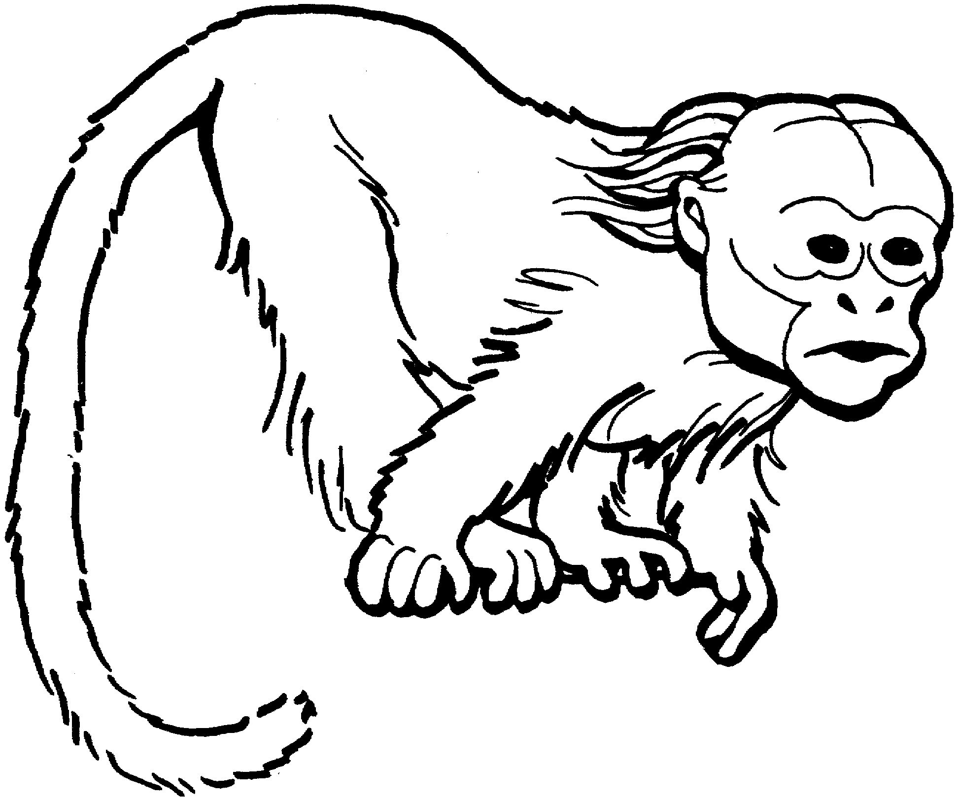 1944x1623 Monkey Coloring Page Ppinews.co
