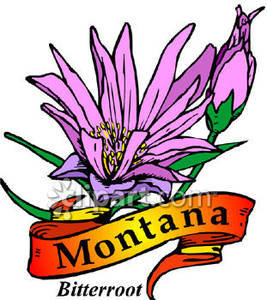 267x300 Flower Of Montana, The Bitterroot