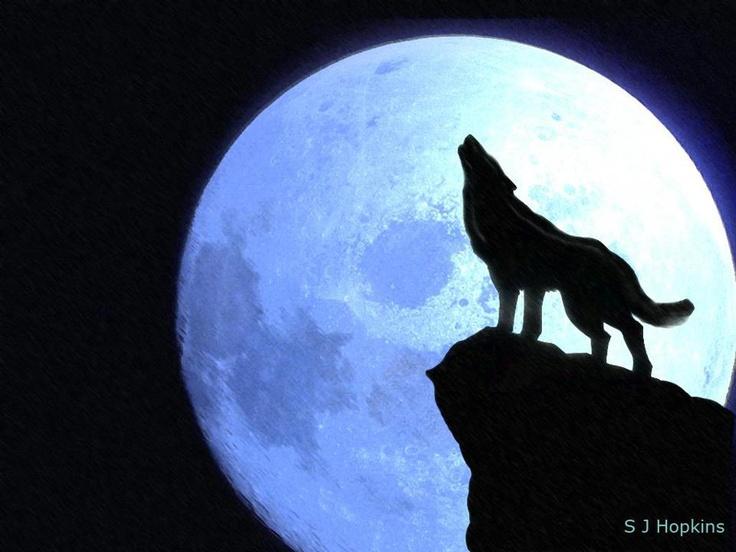 736x552 113 Best Lunar Musings Images Nature, Beach