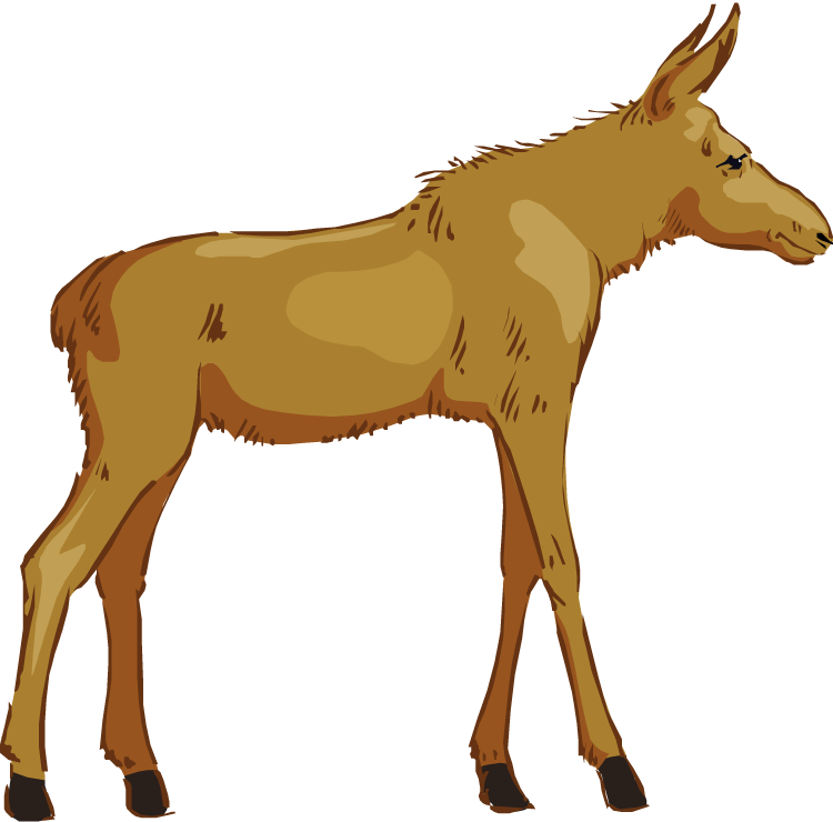750x740 Free moose clipart 7