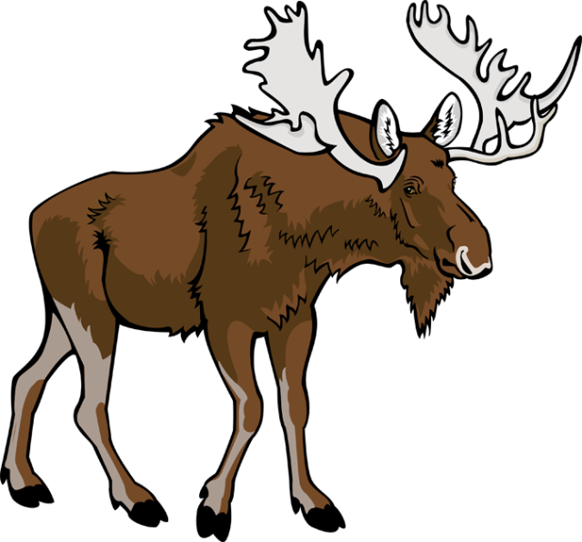 640x596 Moose clipart free download clip art on