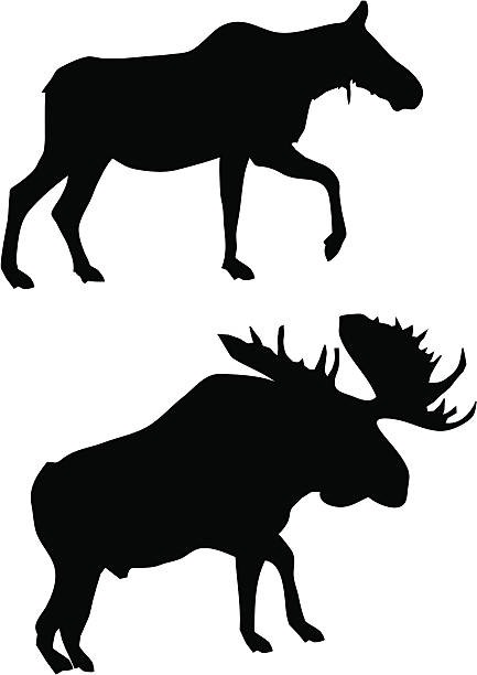 433x612 Moose Clipart Vector