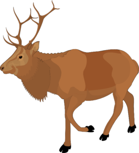273x299 Brown Moose Clip Art