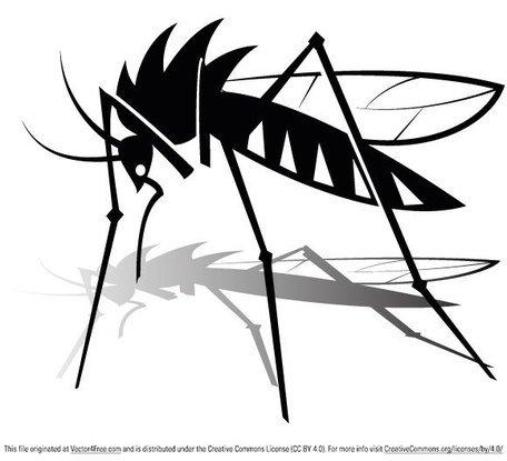 456x415 Mosquito Clip Art, Vector Mosquito