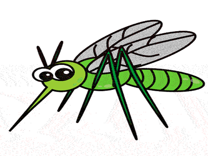 800x600 Have You Ever Wondered Why God Created Mosquitoes