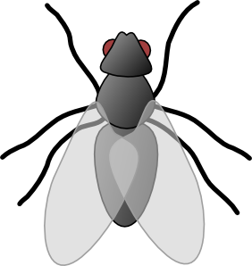 282x298 Fly Bug Insect Clip Art