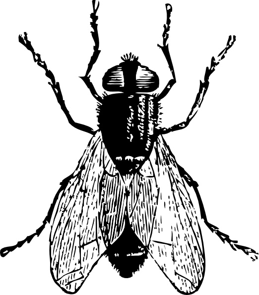 522x595 Fly Bug Insect Clip Art Free Vector In Open Office Drawing Svg