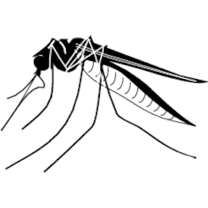 300x300 Mosquito Clipart, Cliparts Of Mosquito Free Download (Wmf, Eps