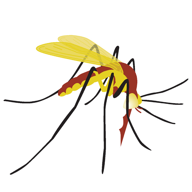 800x800 Mosquito Clipart 2 Clipart