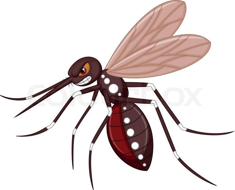 800x647 Tiger Mosquito Clipart