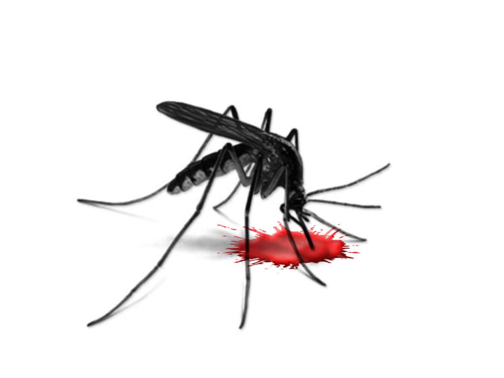 1024x768 Top 82 Mosquito Clip Art