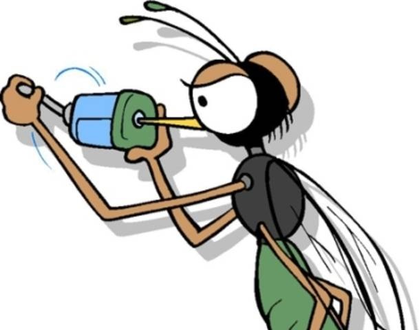 609x480 Cartoon Mosquito Clipart 4