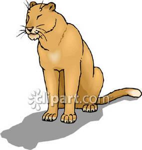 285x300 Mountain Lion