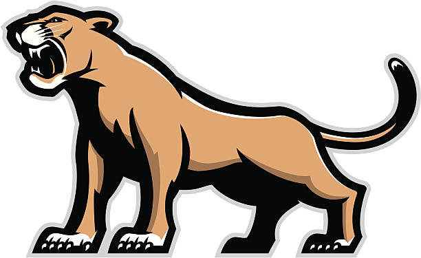 612x375 Mountain Lion Clipart
