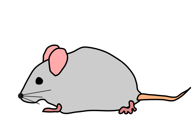800x566 Grey Clipart Mouse Animal