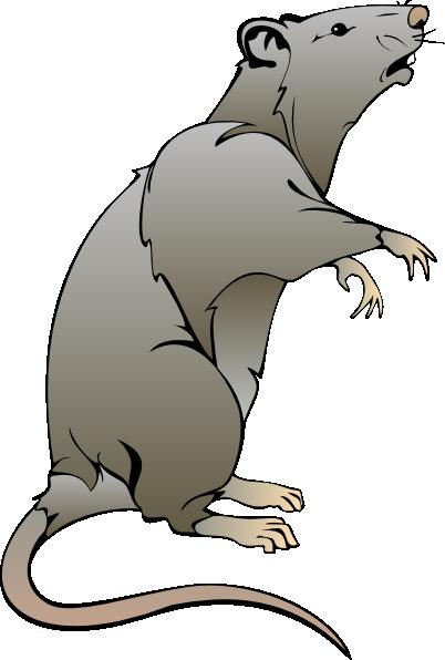 402x596 Rat Clip Art