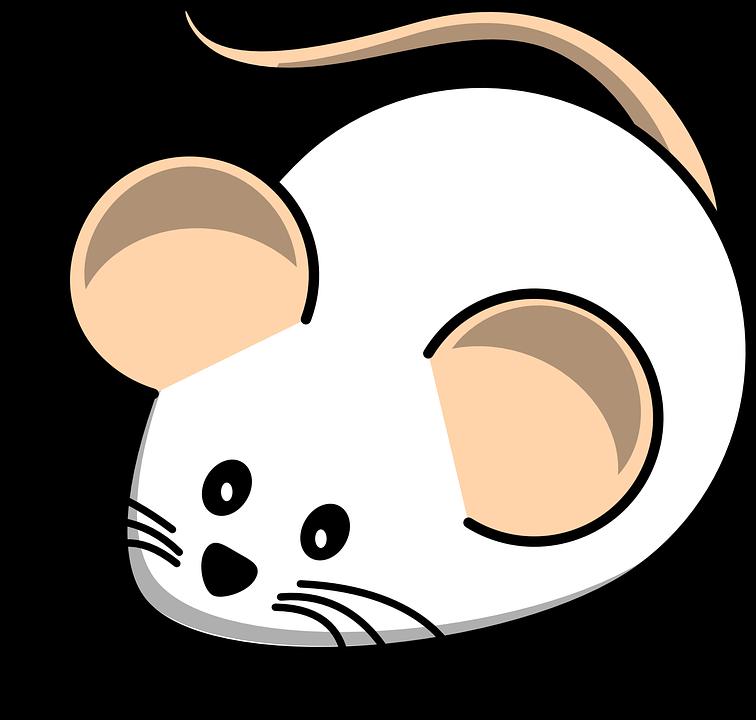 756x720 Rat Clipart Mouse Animal