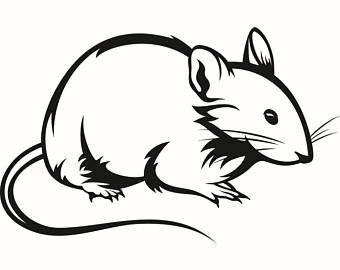 340x270 Mice clipart pet