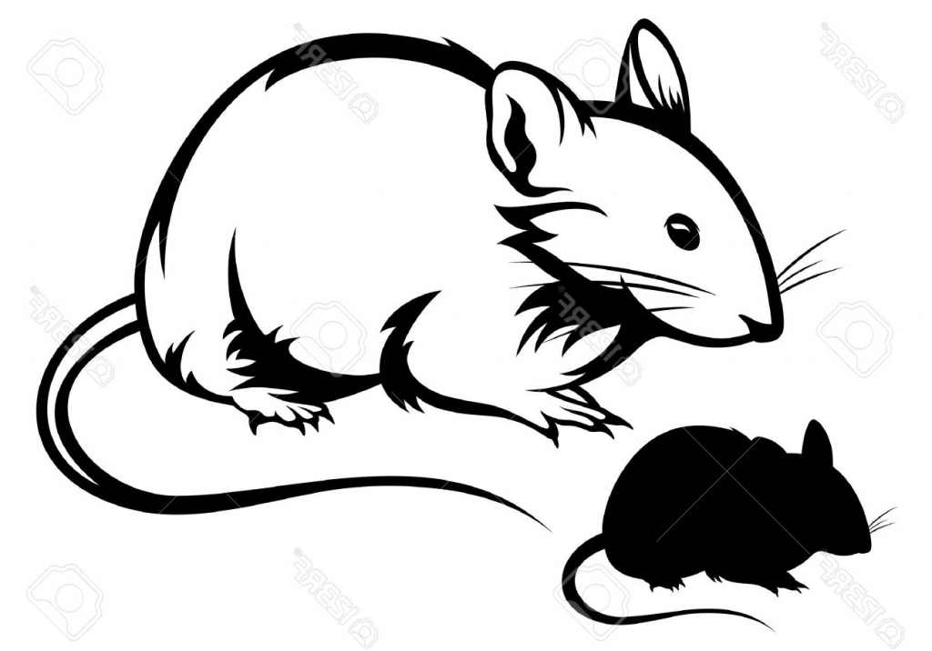 1024x716 Simple Mouse Drawing Lab Mouse Stock Vector Illustration And