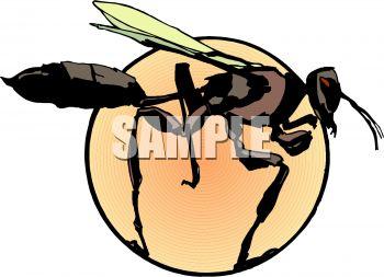 350x253 Mud Dauber Wasp Clip Art