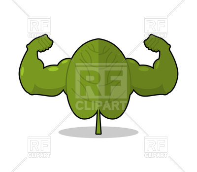 400x349 Spinach Strong. Useful Herbs With Big Muscles. Royalty Free Vector