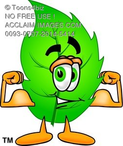 253x300 Toons4biz Clip Art Cartoon Leaf Character Flexing Muscles To Show