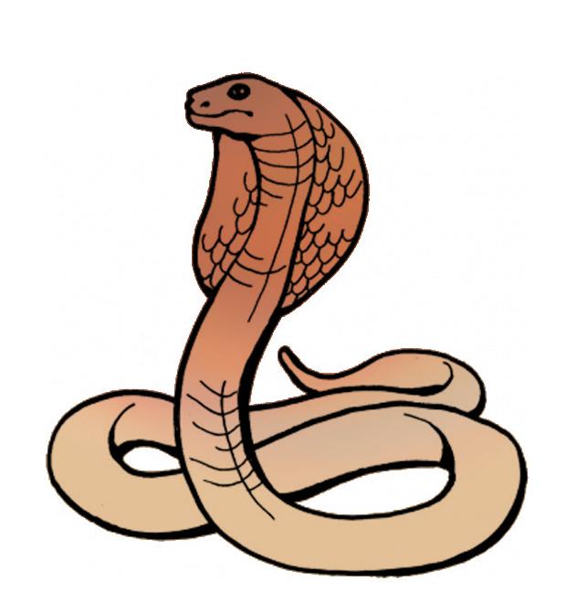 632x671 Top 94 Cobra Clip Art
