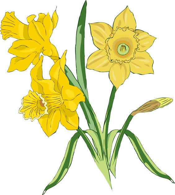 564x628 Daffodil Wreath Cliparts Many Interesting Cliparts