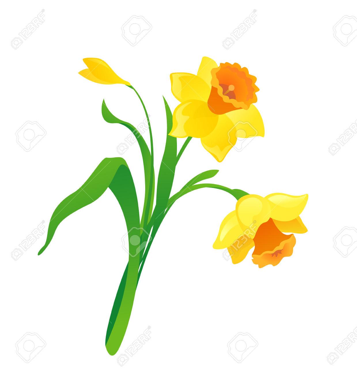 1239x1300 Daffodil Clipart Drawn