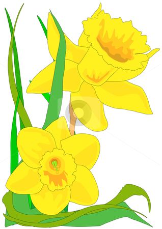 318x450 Graphics For Daffodil Free Flower Graphics