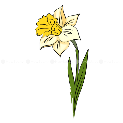 500x500 Narcissus How To Draw Flowers How To Draw