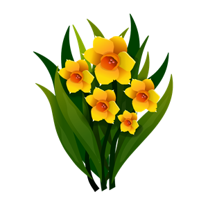 300x300 Yellow Flower Clipart Narcissus Flower