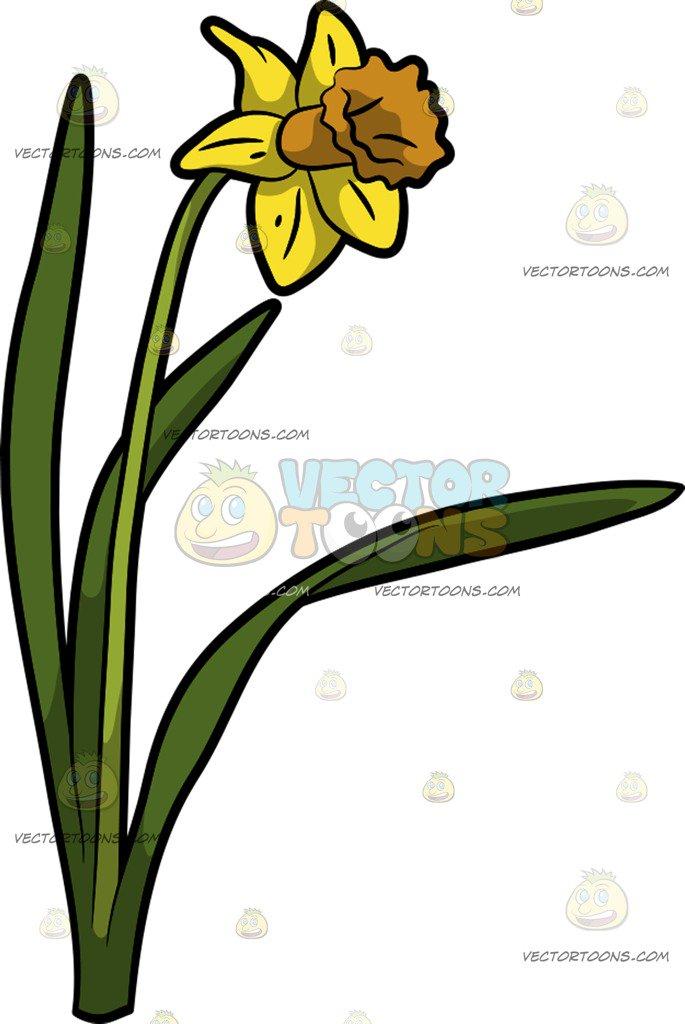 685x1024 A Pretty Daffodil Flower Cartoon Clipart