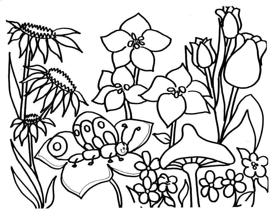 3288x2499 Science Nature Coloring Digital Art Gallery Pages 906x683 Spring Season