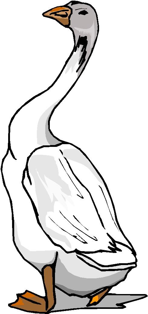 490x1039 Long Neck Goose Clipart