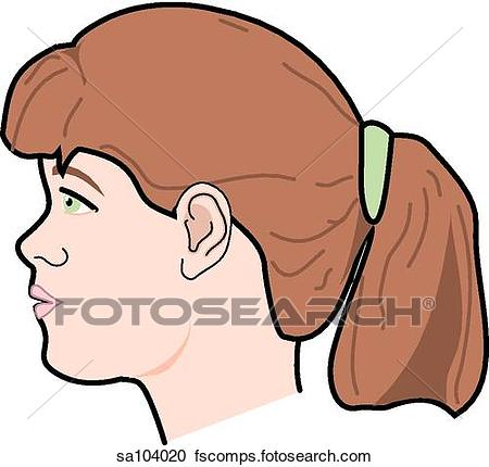 450x430 Stock Illustrations Lateral View The Externalnatomy