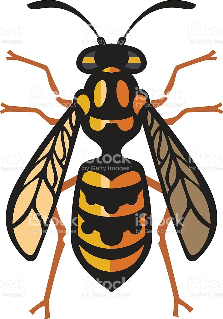 714x1024 Wasp Nest Clipart