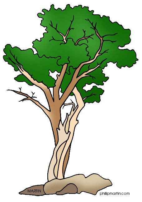 456x648 22 Best Clip Art Trees For Animated Power Points Images