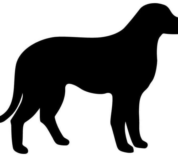 678x600 Dog Outlines Dogs Outline Free Download Clip Art Free Clip Art