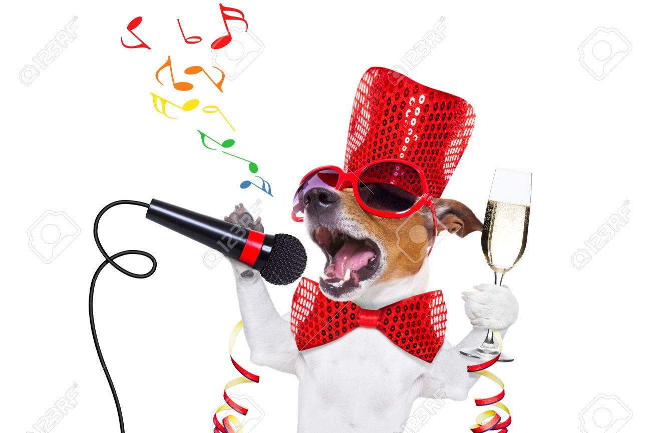 1300x866 Happy New Year Dog Images Amp Stock Pictures. Royalty Free Happy New