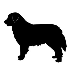 300x300 568 Best Pets Images Sketches, Adobe Illistrator