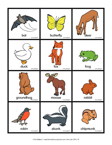 Nocturnal Animals Clipart | Free download best Nocturnal ...