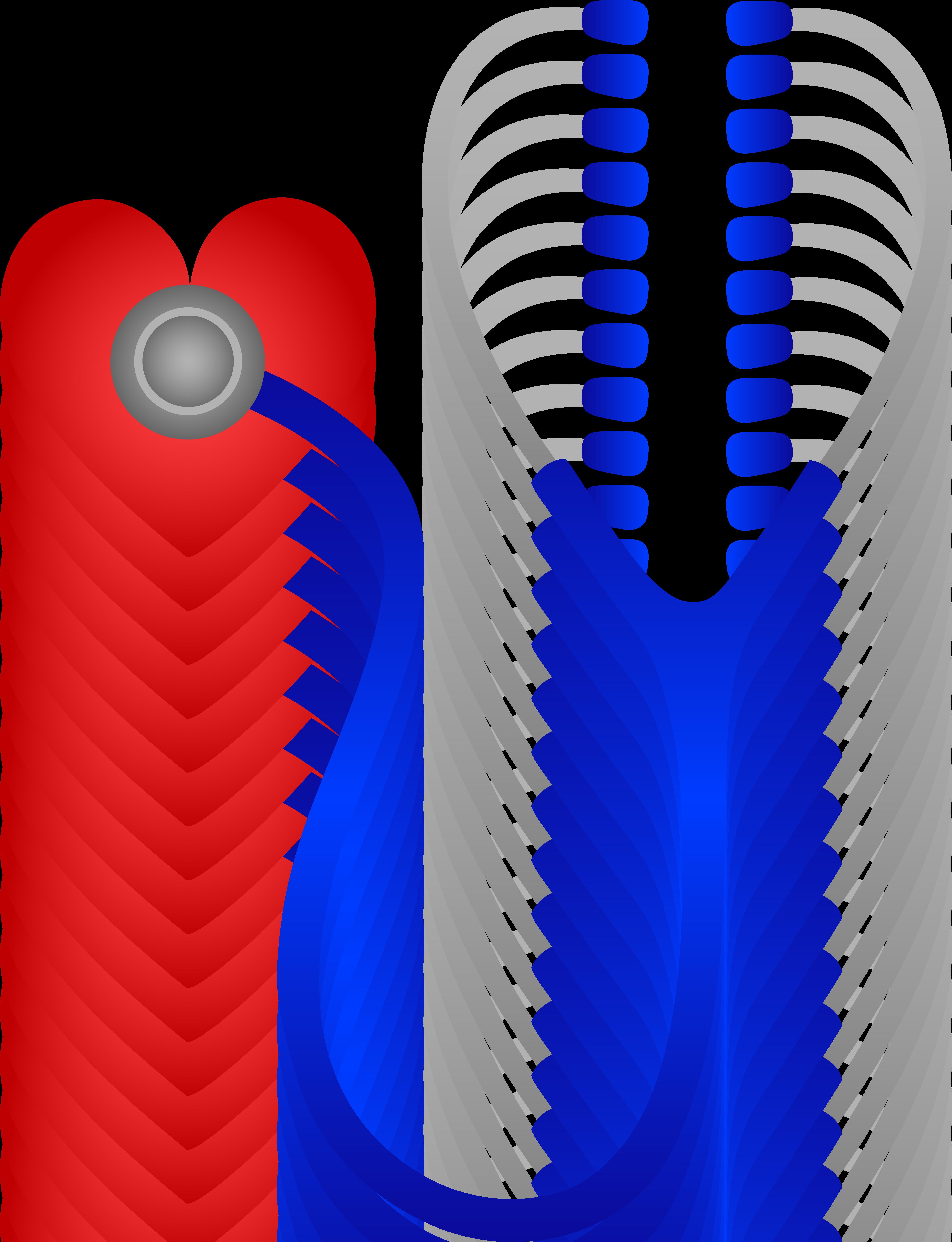 4809x6271 Nurse Clipart Heart Rhythm