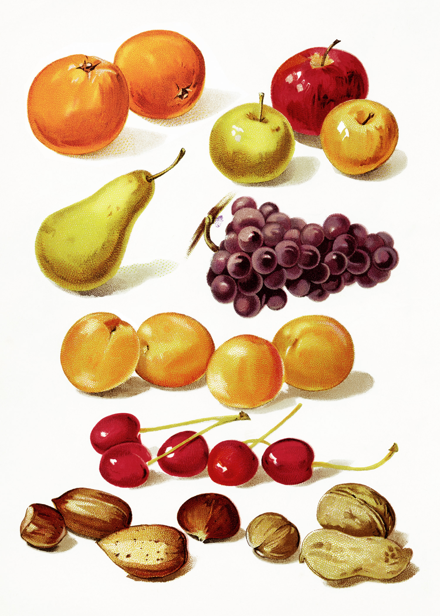 1500x2100 Page Of Fruit And Nuts ~ Free Vintage Image Old Design Shop Blog