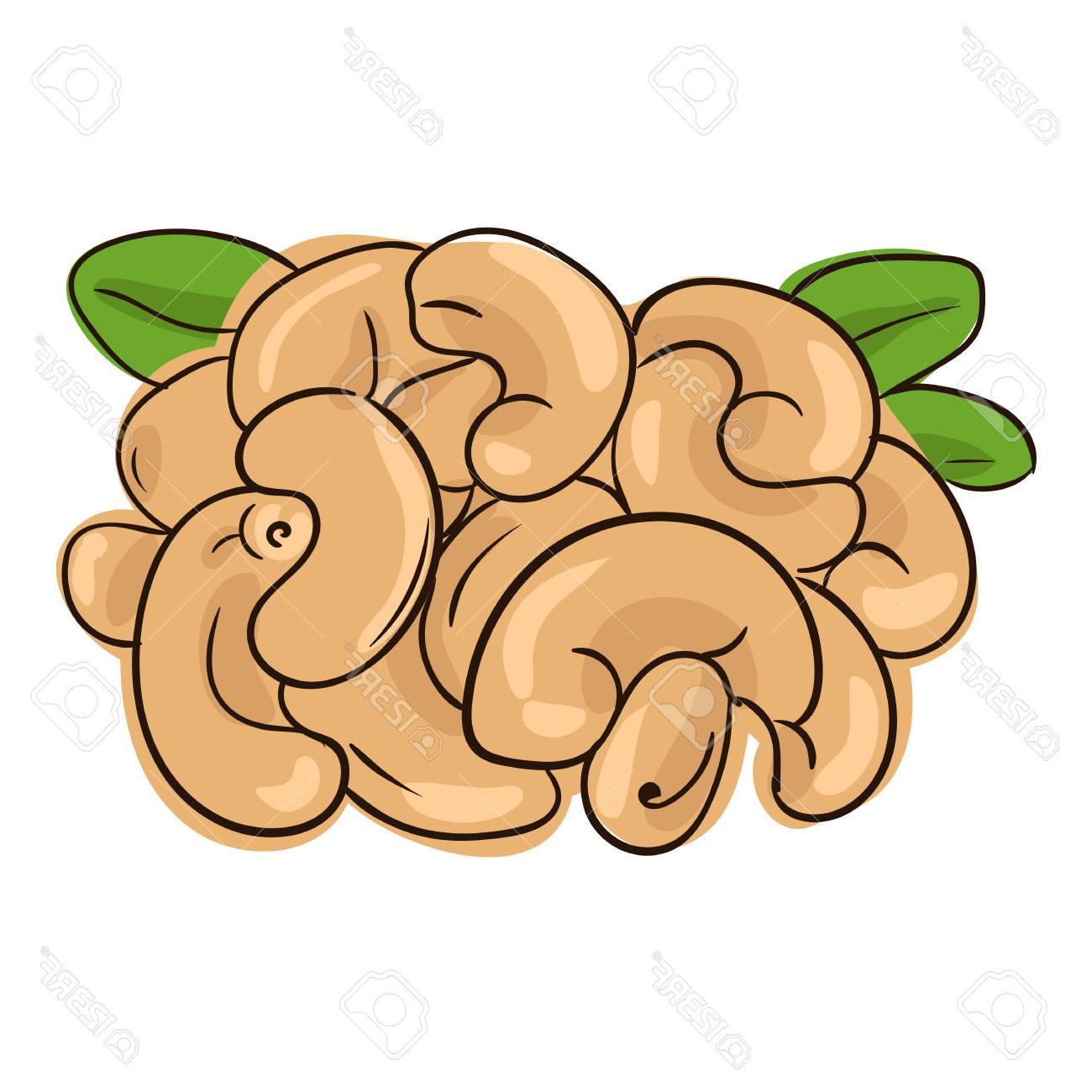 1300x1300 Best Cashew Clipart Nut Images
