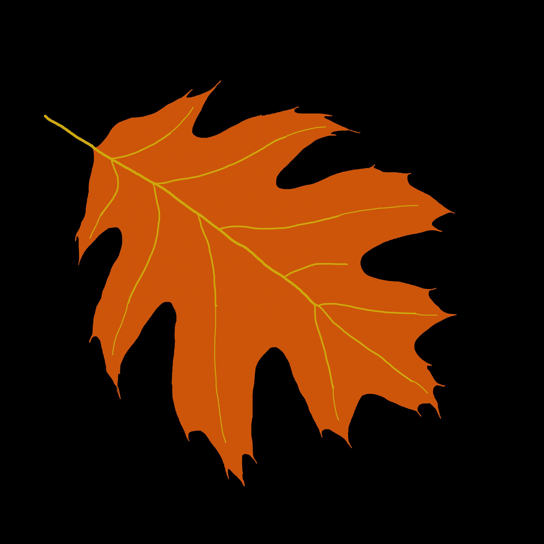 3000x3000 Picture Of Oak Leaves Clipartsco, Yellow Oak Leaf Clip Art