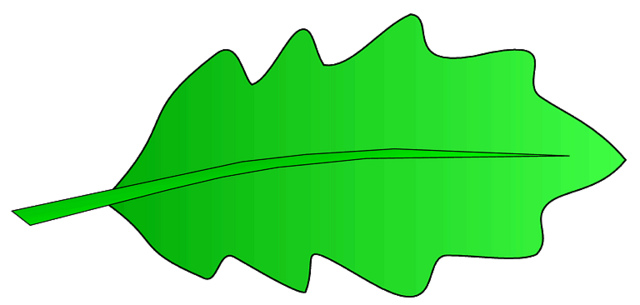 640x305 Leaf Clipart Oak Leaf