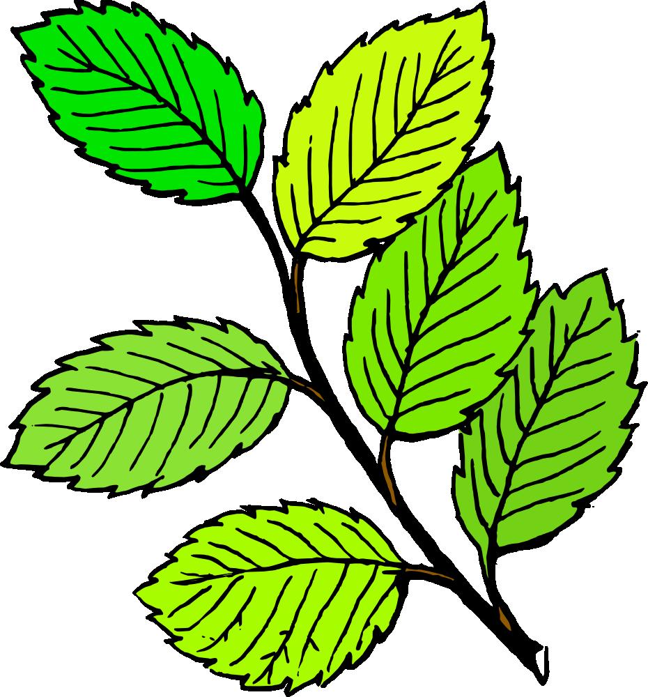 930x1000 Oak Leaf Clipart Free Images