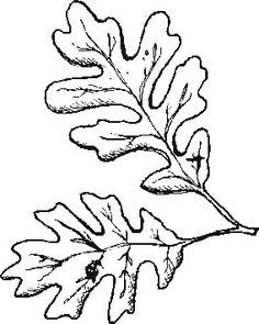 Oak Leaves Outline Free download