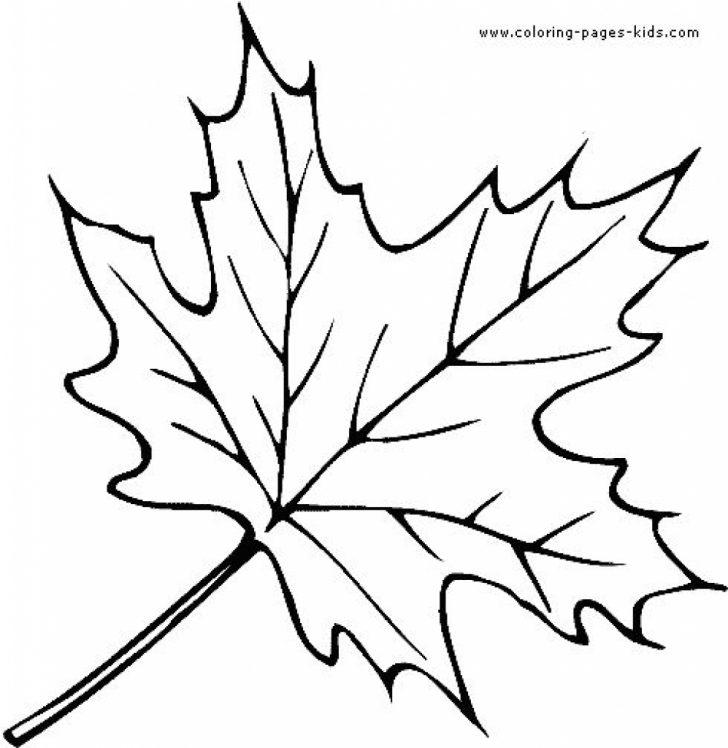 Oak Leaves Outline | Free download best Oak Leaves Outline on ...